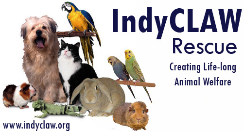 IndyCLAW Rescue - Creating Lifelong Animal Welfare